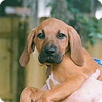 Adopt A Pet :: Iris - St, Augustine, FL