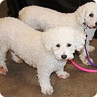 Adopt A Pet :: Mindy & Penny - Gilbert, AZ