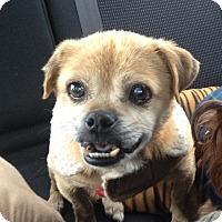Adopt A Pet :: Sebastian - Wilmington, DE