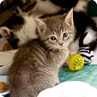 Adopt A Pet :: Kim - Island Park, NY