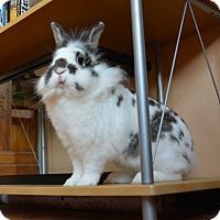 Adopt A Pet :: Teddy - Portland, ME