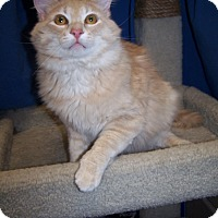 Adopt A Pet :: Morris - Colorado Springs, CO