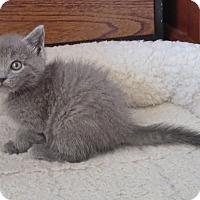 Adopt A Pet :: Burt - Fort Wayne, IN
