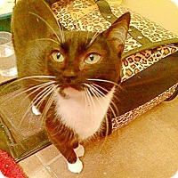 Adopt A Pet :: Sugar Paws - Midvale, UT