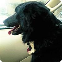 Adopt A Pet :: Toby~ADOPTED! - Davenport, IA