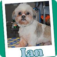 Adopt A Pet :: Ian Trumbell - Pataskala, OH