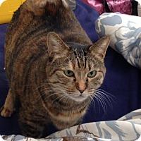 Adopt A Pet :: Mame - Acushnet, MA