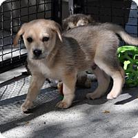 Adopt A Pet :: Dennis - Suwanee, GA