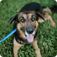 Adopt A Pet :: *EDWIN - Sugar Land, TX