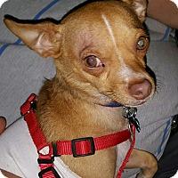 Adopt A Pet :: Rocky - Andalusia, PA