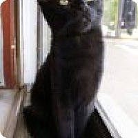 Adopt A Pet :: Raven - Franklin, TN