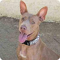 Adopt A Pet :: Lulu - Agoura, CA