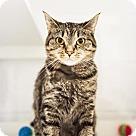 Adopt A Pet :: Sylvia - Parma, OH