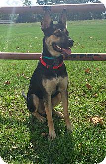 Shepherd (Unknown Type) Mix Dog for adoption in Pierre, South Dakota - Shep