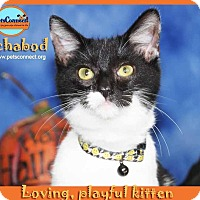 Adopt A Pet :: Ichabod - South Bend, IN