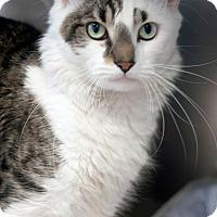 Adopt A Pet :: Spooky - Manahawkin, NJ