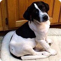 Adopt A Pet :: Dylan - Northwood, NH