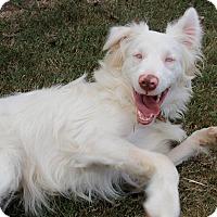 Adopt A Pet :: Zonder - Homewood, AL