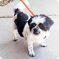 Adopt A Pet :: Baby Boy - Atlanta, GA