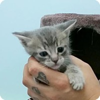 Adopt A Pet :: Razzmatazz - Lemoore, CA