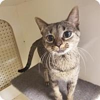 Adopt A Pet :: Haley - Kenosha, WI