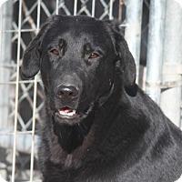 Adopt A Pet :: Thriller - Jewett City, CT