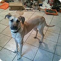 Adopt A Pet :: Prince - Alamosa, CO