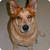 Adopt A Pet :: Suzie Q - Lockhart, TX