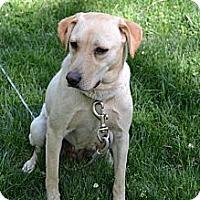 Adopt A Pet :: Daffy - Lewisville, IN