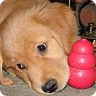 Adopt A Pet :: Albie