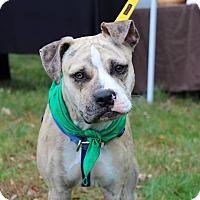Adopt A Pet :: Romeo - Woodbridge, CT
