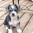 Adopt A Pet :: Kipper