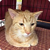 Adopt A Pet :: Camden - Frederick, MD