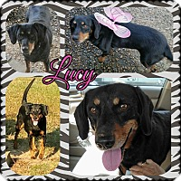 Adopt A Pet :: Lucy - in CT - East Hartford, CT