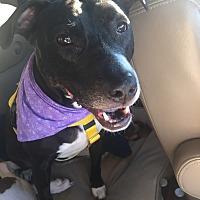 Adopt A Pet :: Loretta - Staatsburg, NY