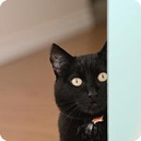 Adopt A Pet :: Solstice - Vancouver, BC