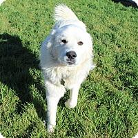 Adopt A Pet :: Chance - Kyle, TX