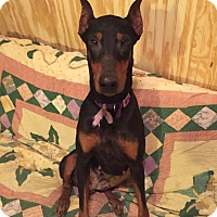 Adopt A Pet :: Leah--pending - New Richmond, OH
