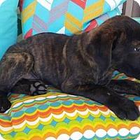 Adopt A Pet :: Moose - Scottsboro, AL