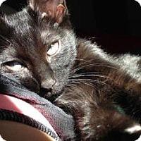 Adopt A Pet :: Edmund - Fort Collins, CO