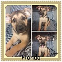 Adopt A Pet :: Hondo Adoption pending - Manchester, CT