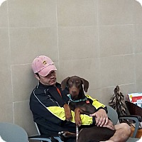 Adopt A Pet :: Mooshoo - El Paso, TX
