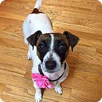 Adopt A Pet :: Raelynn - Dayton, OH
