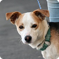 Adopt A Pet :: Reiley - Palmdale, CA