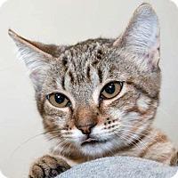Adopt A Pet :: Venus - Prescott, AZ