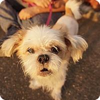 Adopt A Pet :: Duck - Brooklyn, NY
