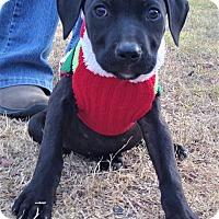 Adopt A Pet :: Molly ~ PENDING ADOPTION! - Brattleboro, VT