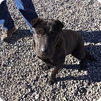 Adopt A Pet :: Sissy - Cedaredge, CO