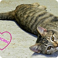 Adopt A Pet :: Princess - Lawrenceburg, TN