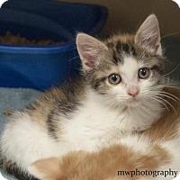 Adopt A Pet :: Crystal  $20 - Lincolnton, NC